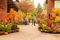 Todt Herbstmarkt 2013-13