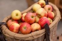 Todt Herbstmarkt 2013-47
